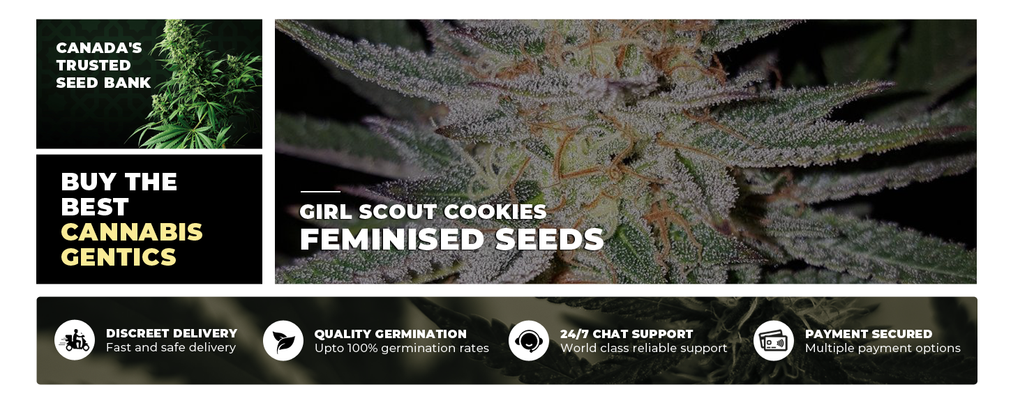 Best Feminised Cannabis Gentics Canada